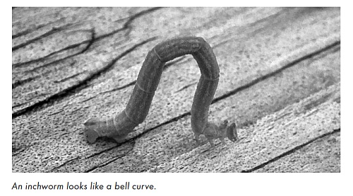 An inchworm looks like a bell curve